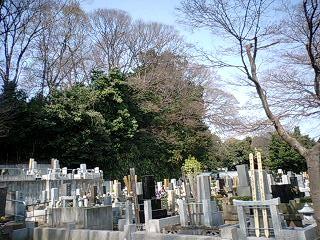 cyotokuji03.jpg