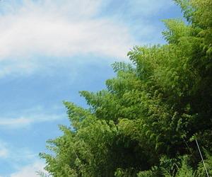 青い空と笹