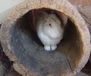 木の穴に非難