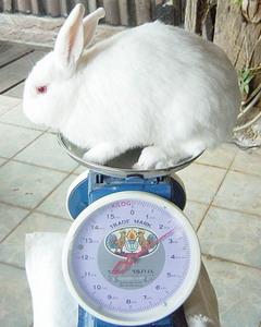 にーちゃん体重測定