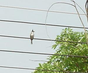 とんがり鳥1