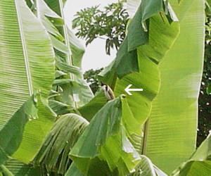 とんがり鳥2