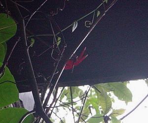 真赤なトンボ1