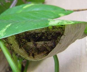 ハチの巣2