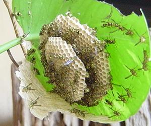 ハチの巣3