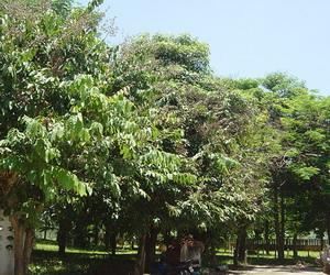 家の前の木
