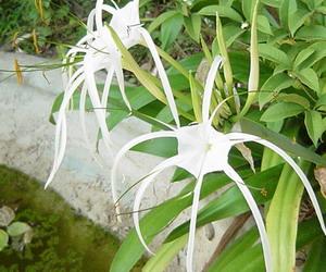 白いシャープな花