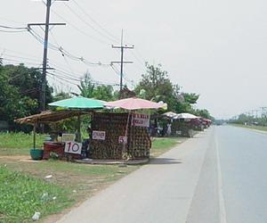 パイン通り1
