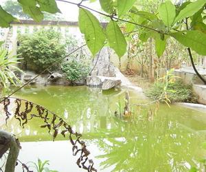 ミステリアスな人工池