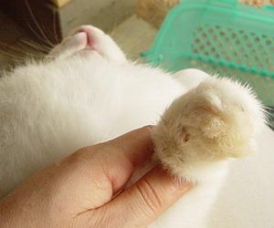 きゅうちゃんの爪