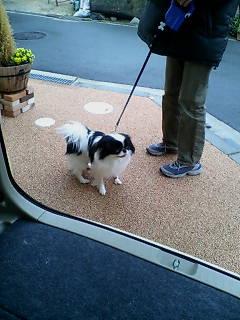 ふんふふーん♪隠れ肥満犬と呼んでください。