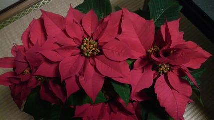 2008-12-12-1.jpg