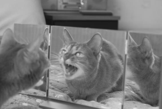 三面鏡と楓