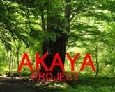 赤谷プロジェクト