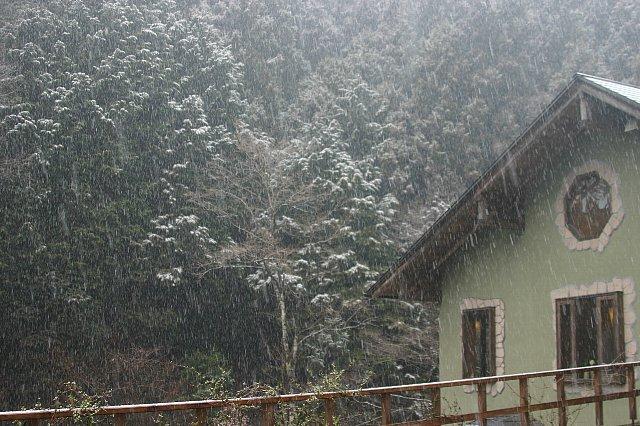 雪景色と店内の花-2 002