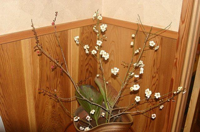 雪景色と店内の花-2 013