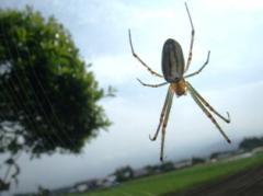 蜘蛛の網にかかれ安倍内閣