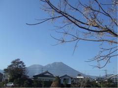 夷守岳と木