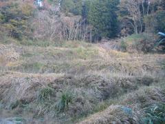 荒れる段々畑