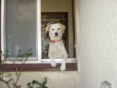 窓から犬.jpg
