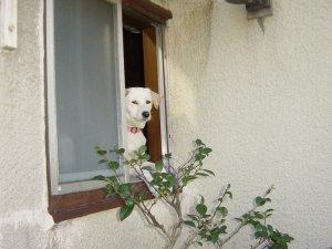 窓から犬その2