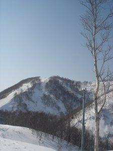 白い木々たち