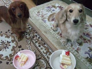 カンナの誕生日
