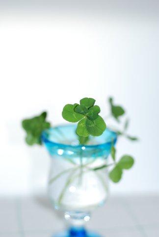 clover9-5.jpg