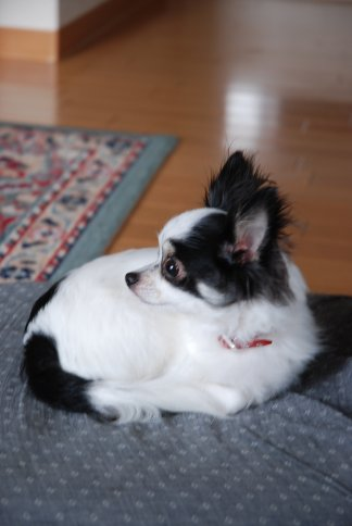 dog5-1.jpg