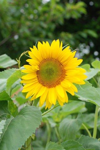 flower10-1.jpg