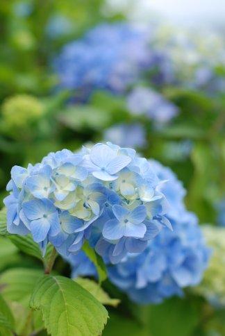 flower10-2.jpg