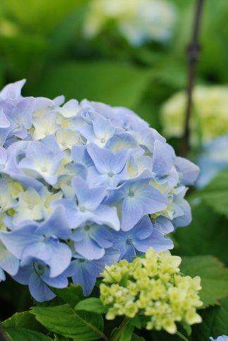 flower10-3.jpg
