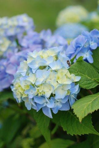 flower10-4.jpg