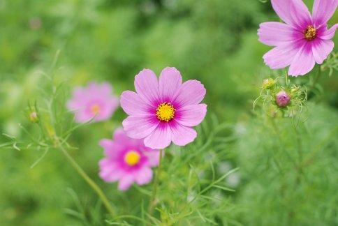 flower10-5.jpg