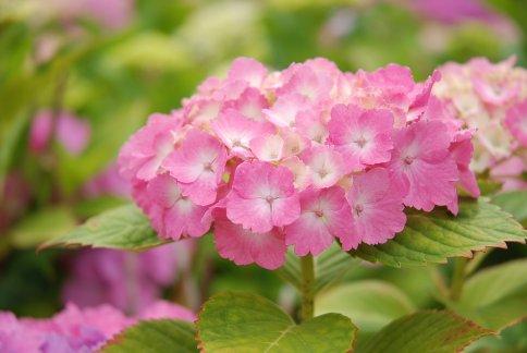 flower10-6.jpg