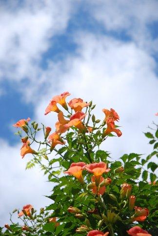 flower10-7.jpg