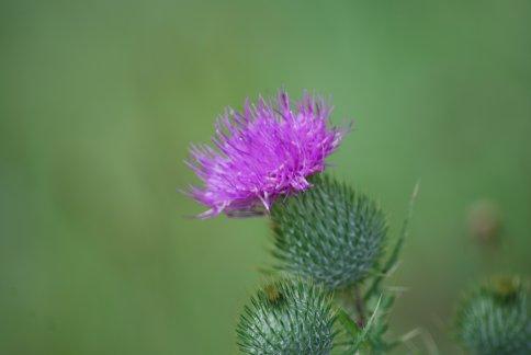 flower5-71.jpg