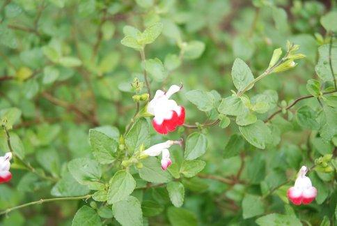 flower5-75.jpg
