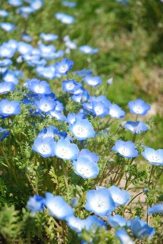 flower8-1.jpg