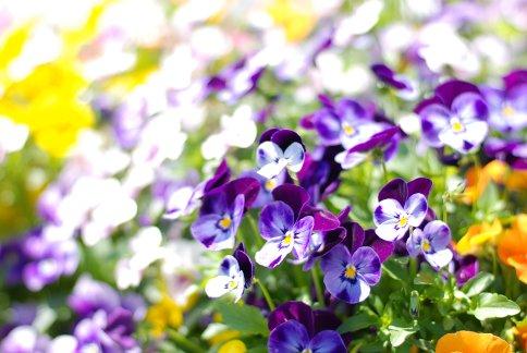 flower8-10.jpg
