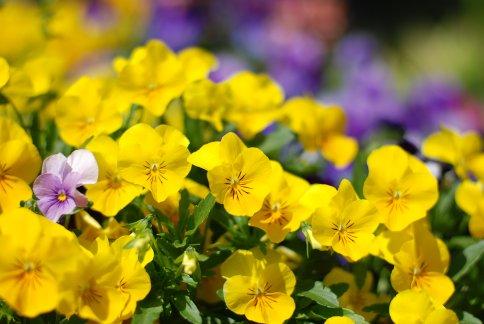 flower8-11.jpg
