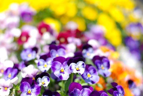 flower8-12.jpg
