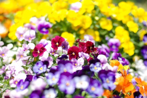 flower8-13.jpg
