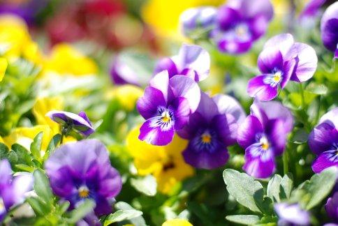 flower8-14.jpg