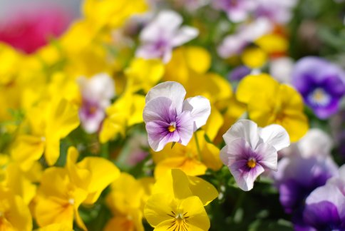 flower8-15.jpg