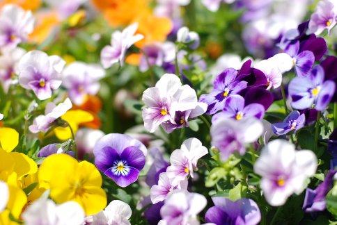 flower8-16.jpg