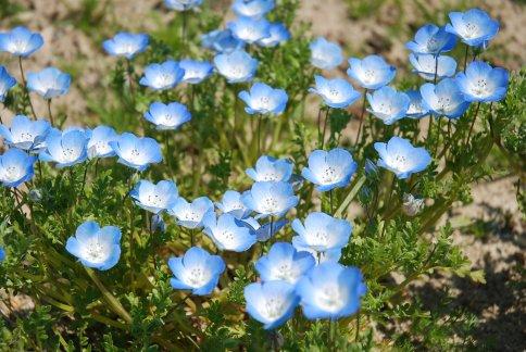 flower8-2.jpg