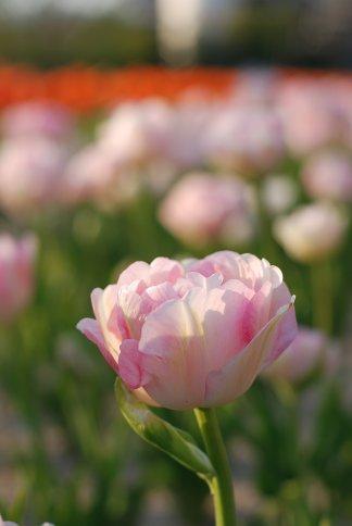 flower8-4.jpg