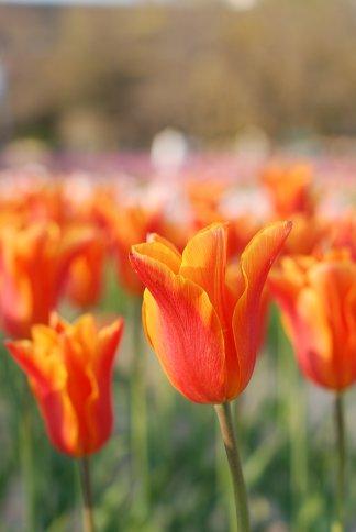 flower8-5.jpg