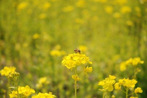 flower8-6.jpg